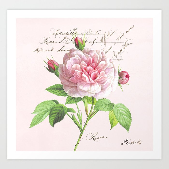 Paris Rose Art Print