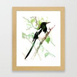 Magpie Bird, magpie Framed Art Print