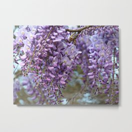Spring Botanical -- Wisteria Lane, Boldly -- Floral Purple, Lavender and Orchid Landscape Metal Print