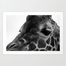 Zoo series no.3 giraffe Art Print