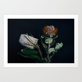 Banksia Flowers Art Print