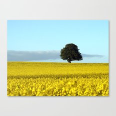 Fife's Golden Fields Of Rapeseed. Canvas Print
