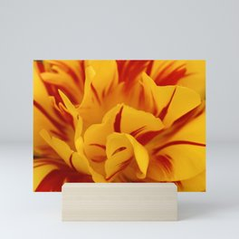 A Chaos of Reds and Yellows: in the Heart of a Triandrus Daffodil Mini Art Print