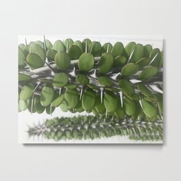 Barbed Metal Print