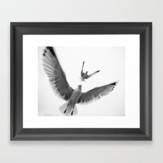 Seaguls {Eight} Framed Art Print
