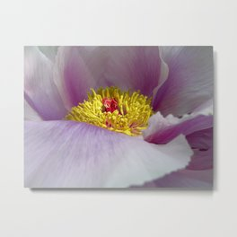 peony bloom macro XXVII Metal Print