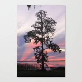 Gods Cypress Canvas Print