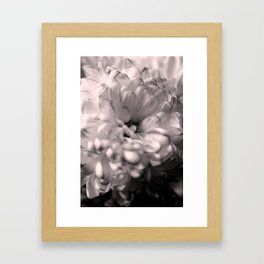 Black and White Chrysanthemum Framed Art Print
