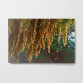 Abstract Canopy Of Evergreen Metal Print