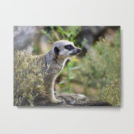 Motionless Meerkat Metal Print