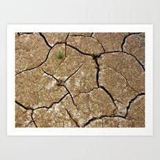dry soil Art Print