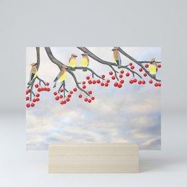 cedar waxwings and crabapples Mini Art Print
