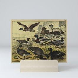 029 anser segetum Brent Goose Common Eider Harlequin Duck Velvet or White winged Scoter Mallard Common Shelduck Northern Pintail10 Mini Art Print