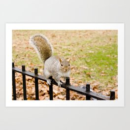 Barry the squirrel Art Print