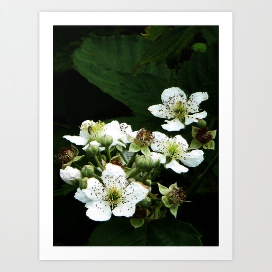 Fraises des bois Flowers Art Print