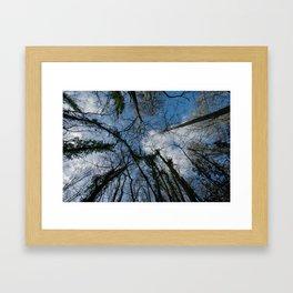 Loamhole Dingle Treetops Framed Art Print
