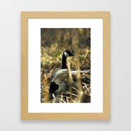 Goose Gathering Framed Art Print