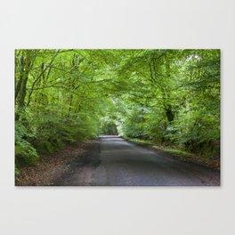Summer Beech Canopy 2 Canvas Print