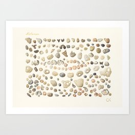 Sea shore Netania Art Print