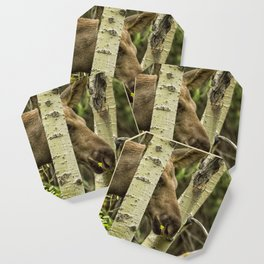 Hiding in Plain Sight - Moose Calf Coaster