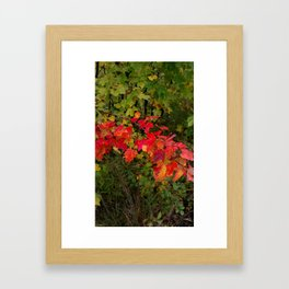 fall beauty Framed Art Print