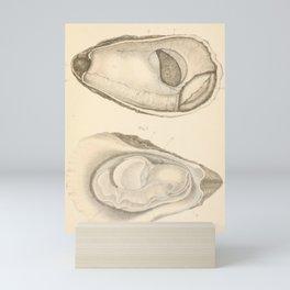 Oyster Anatomy Mini Art Print