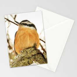 Curious Nuthatch Stationery Cards