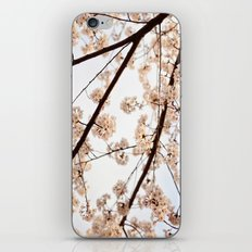 Spring Skies iPhone & iPod Skin