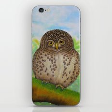 Collared Owlet iPhone & iPod Skin