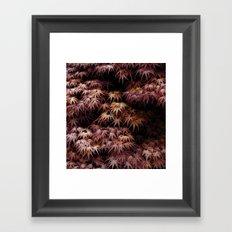 Japanese Maple, Acer Palmatum Seigen Framed Art Print
