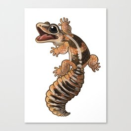 African Fat-Tail Gecko Canvas Print