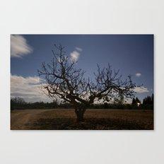 Ficus Carica Canvas Print