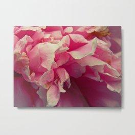 peeling petals, just like paint Metal Print