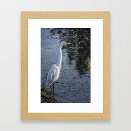 Great Egret at Delta Ponds, No. 1 Framed Art Print