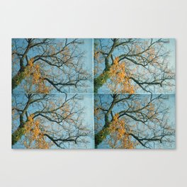 october trees Canvas Print