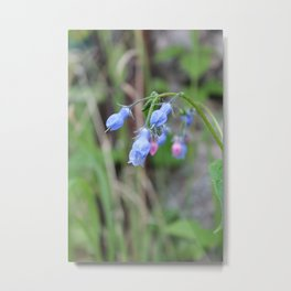 The Bluebells Metal Print