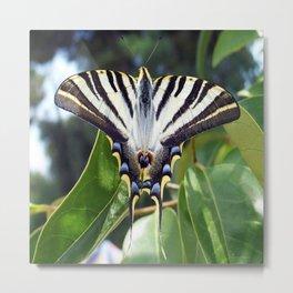 Swallowtail Buttterfly Resting on Oleander Leaves Metal Print