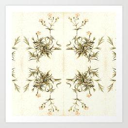 gypsophila repens Art Print