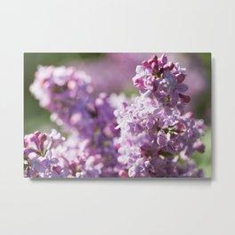 Lilacs 12 Metal Print
