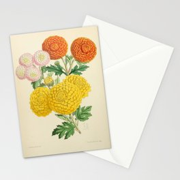 Chrysanthemums Pompon St Michael Countess Madge Wildfire Stationery Cards