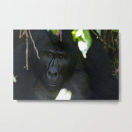 Thinking Hard Metal Print