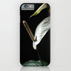 Spathiphyllum cannifolium -