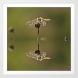 Water reflection of a yellow dragonfly Art Print