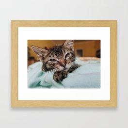 Kitten Stares In To Your Soul Framed Art Print