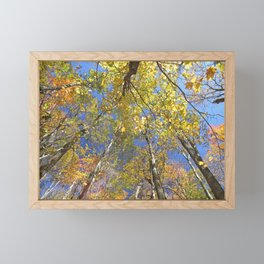 Brightly colored Autumn tree tops Framed Mini Art Print