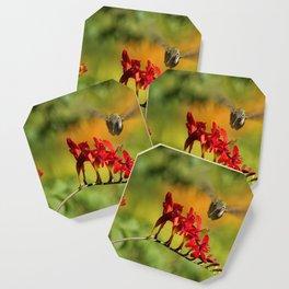 Hummingbird Materializing Coaster