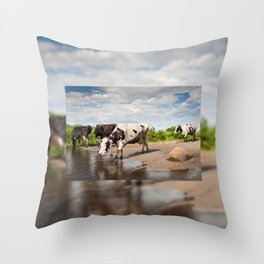 Herd of cows walking across puddle Throw Pillow