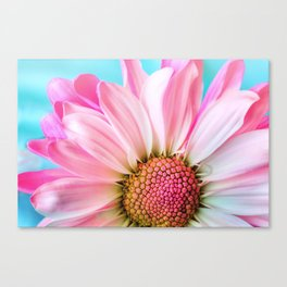 Beautiful Pink Flower Macro, Turquoise Blue Backdrop Canvas Print