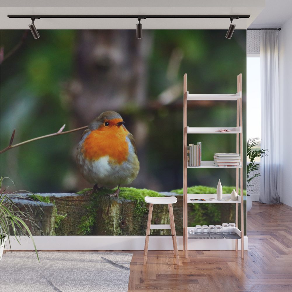 Round Robin Redbreast Wall Mural by cathymcreations (WMP10710313) photo
