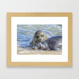 Mama Monk Seal and Pup at the Shoreline, No. 2 - RB00 and PK1 Framed Art Print